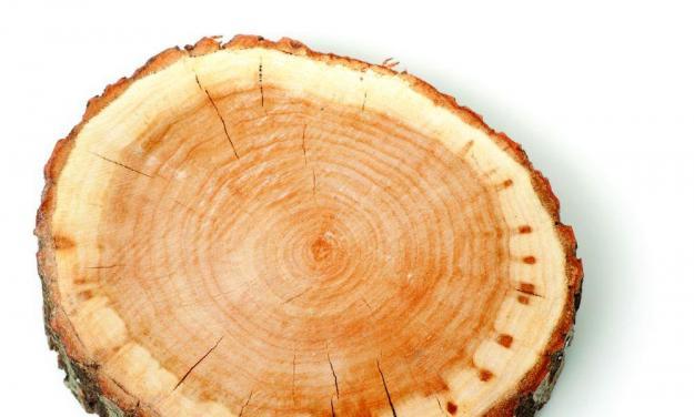 hardwood and sapwood